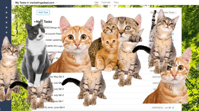 kitties.png